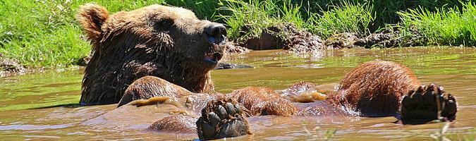 Odbicie? Kontra niedźwiedzi jeszcze przed południem
